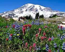 Alpine Meadows full of flowers, world class hiking Mt Rainier. Mount Rainier Cabins at StormkingSpa